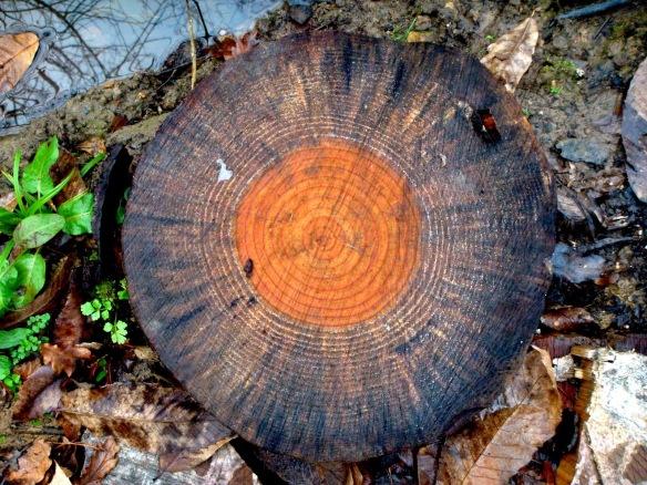 los años del tronco